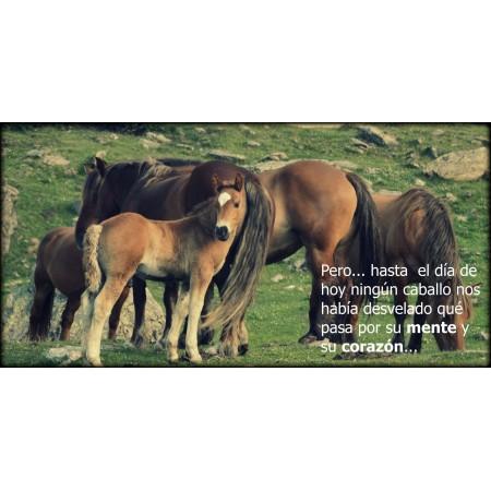Libro SI EL HUMANO SUPIERA, un mensaje de los caballos para toda la humanidad