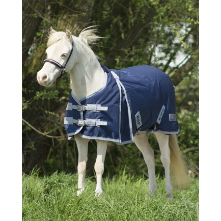 Manta poni shetland QHP paddock