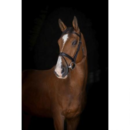 Cabezada de montar para caballo ERIC THOMAS ELITE Genève