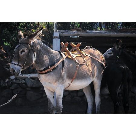Albarda de madera para burros