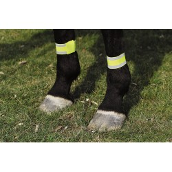 Vendas reflectantes para caballo