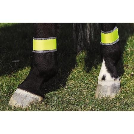 Vendas reflectantes para los posteriores del caballo