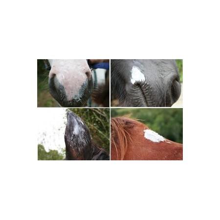 Natjely, vaselina vegetal 100% natural para la piel del caballo