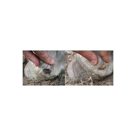 Fourgen serum 100% natural, curación instantánea para las ranillas podridas (250 ml)