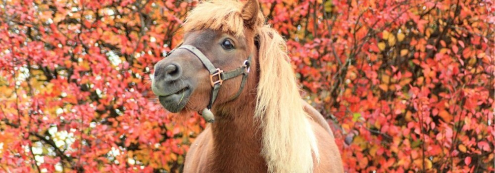 Artículos y Accesorios para Ponis