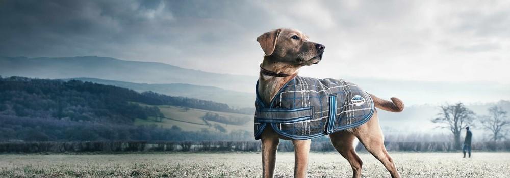 Mantas para Perro