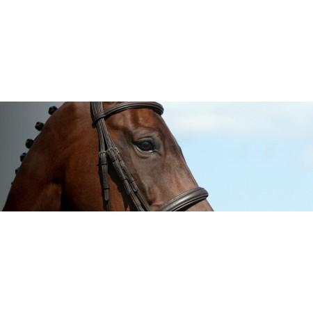 Cabezadas de montar, riendas y accesorios caballo