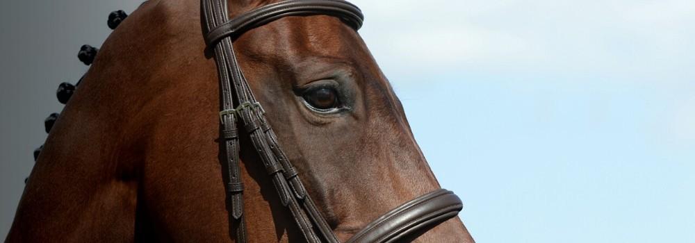 Cabezadas de montar para caballo