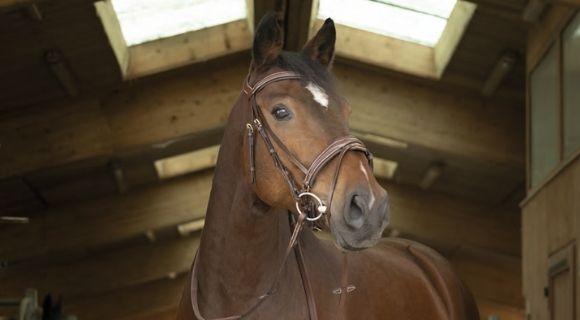 embocaduras para caballo